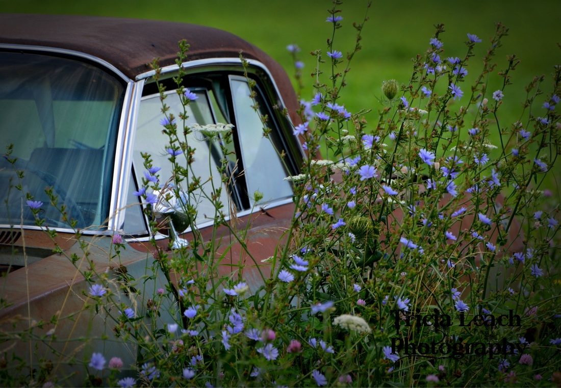 Backyard Pov At Night : Old cars and weeds  Photos by Tricia Lynn